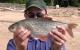 Gardon de 1,5 kg pêche au feeder – lac de Pareloup