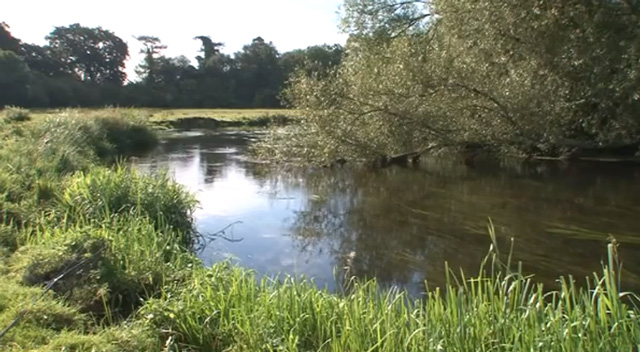 Pêche du barbeau en petite rivière