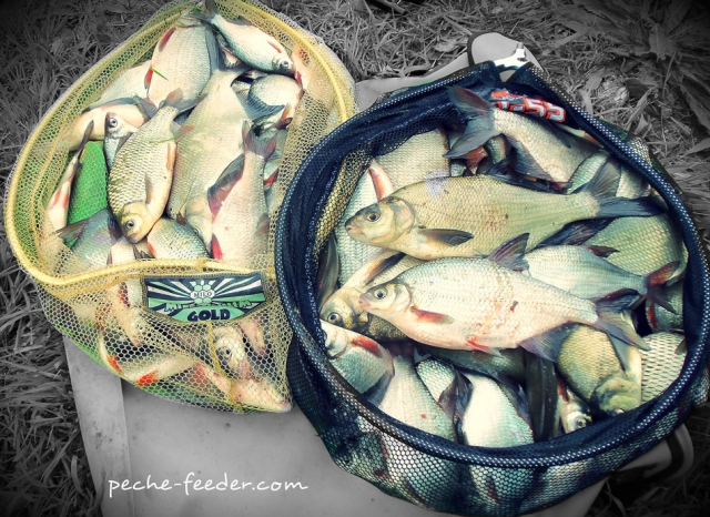 Belle pêche de plaquette au quiver-tip