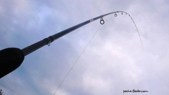 canne-feeder-action-parabolique