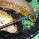 Canne feeder Sensas Classic Competition Carp 9′