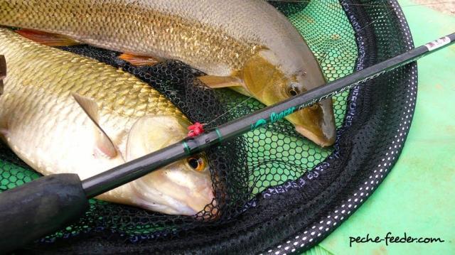 Pêche en riviere au feeder