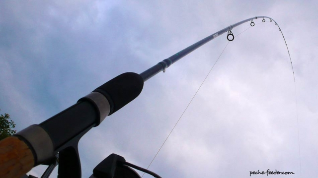 Action canne feeder