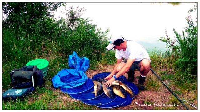 Pêche à la carpe au coup du soir