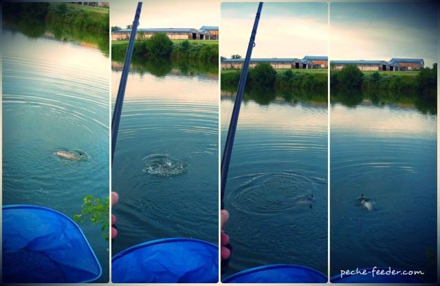 Action de pêche à la carpe