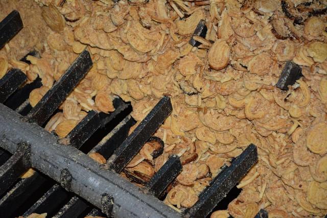 Palmito non conforme pour la fabrication des amorces ssensas