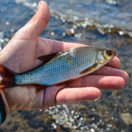 lough-allua-feeder-petits-poissons-10