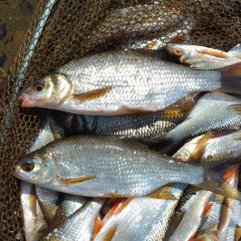 lough-allua-feeder-petits-poissons-8