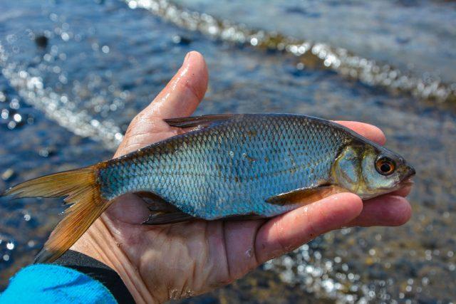 lough-allua-feeder-petits-poissons-9
