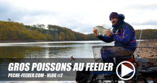 gros-poissons-au-feeder