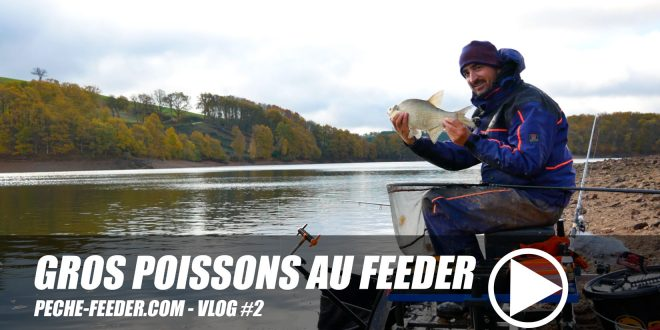 Gros poissons au feeder – Pêche feeder VLOG #2