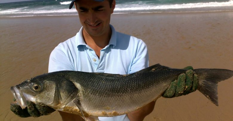 Photo of Surfcasting dans les Landes et Bar Record !