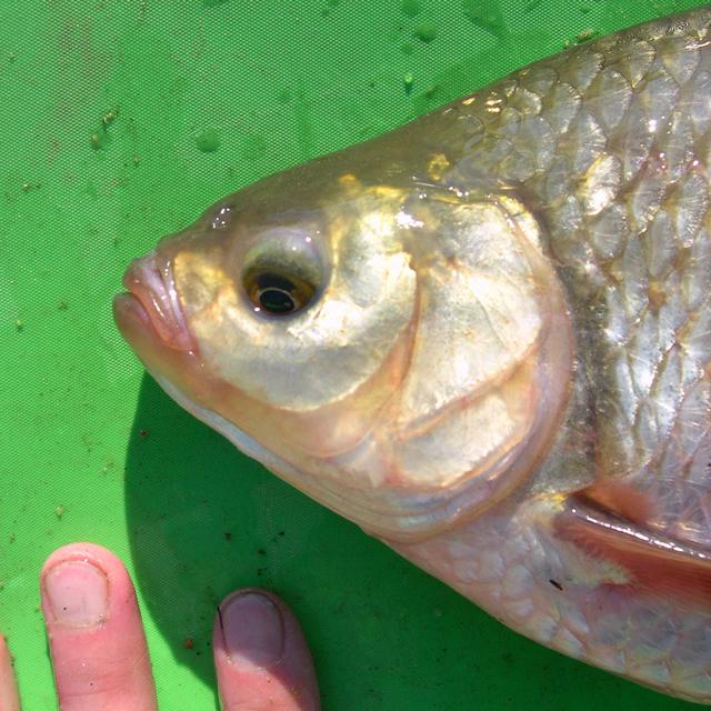 6 montages pour le pêche des specimens