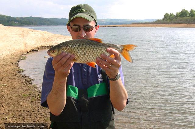 Un magnifique Gardon pêché au quiver dans le lac de Pareloup - Aveyron