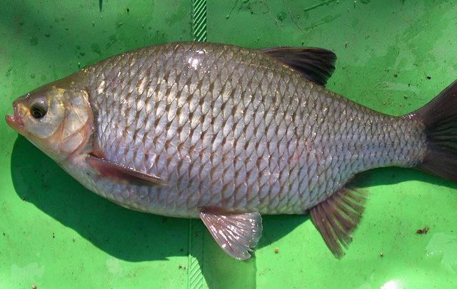 Photo de Pêche fine et gros poissonsau lac de Pareloup