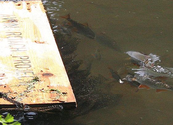 Photo of Sauvegarde des Gardons de la rivière Avon Hampshire
