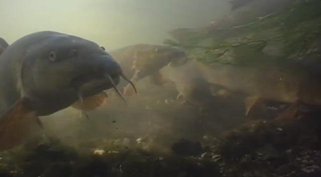 Photo of Pêche du barbeau en petite rivière