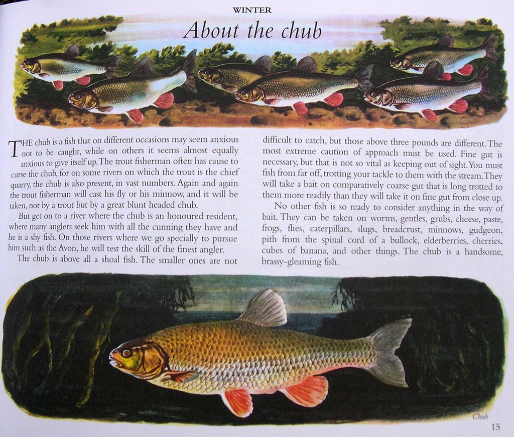 Apprendre à connaitre les différentes espèces de poissons