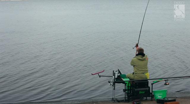 Photo of Perches au feeder dans la Volga – Vidéo