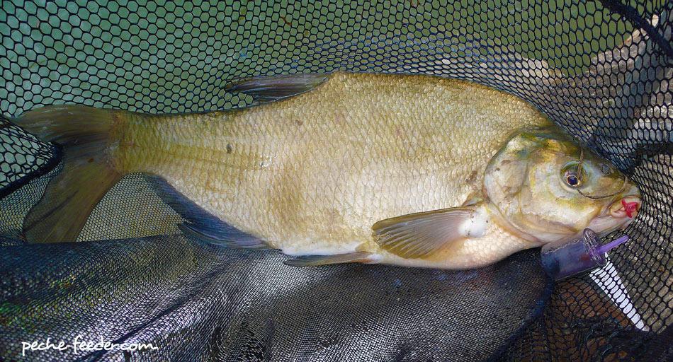 Internet les magasins louganska tout pour la pêche