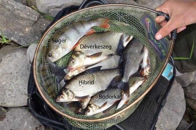 les-poissons-du-lac-de-inniscarra