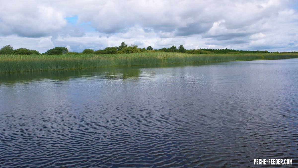 shannon-river-fishing-bream-08