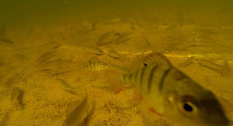 Photo of La pêche au feeder de l'autre côté du miroir