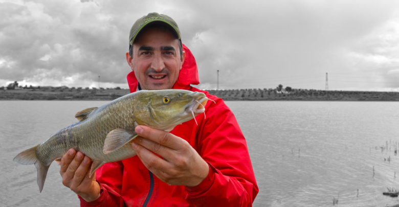 Photo de Feeder en Extremadura #5 – Lac de Alange