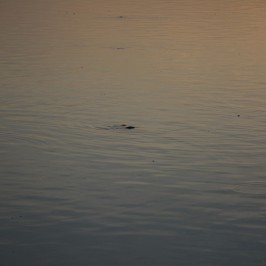 marais-d-orx-peche-landes-leve-de-soleil-carpeaux