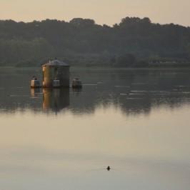 oiseaux-marais-d-orx-peche-landes