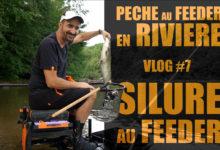 peche-au-feeder-en-riviere-silure-au-feeder-7