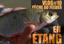 Photo of Pêche au feeder en étang, l'erreur à ne pas commettre