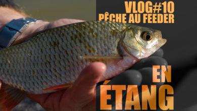Photo de Pêche au feeder en étang, l'erreur à ne pas commettre