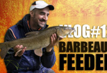 Photo of Vidéo : Barbeaux au feeder