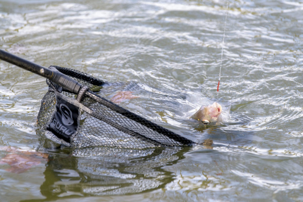 pêche au feeder en canal